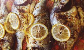 تبسي سمك