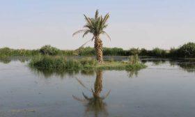 """""""محمية الأزرق"""" في الأردن.. سحر الطبيعة المائية وسط الصحراء"""