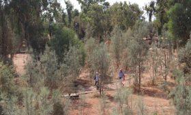 سفاري إفريقية في محمية أردنية.. عشق الحياة البرية – (صور)