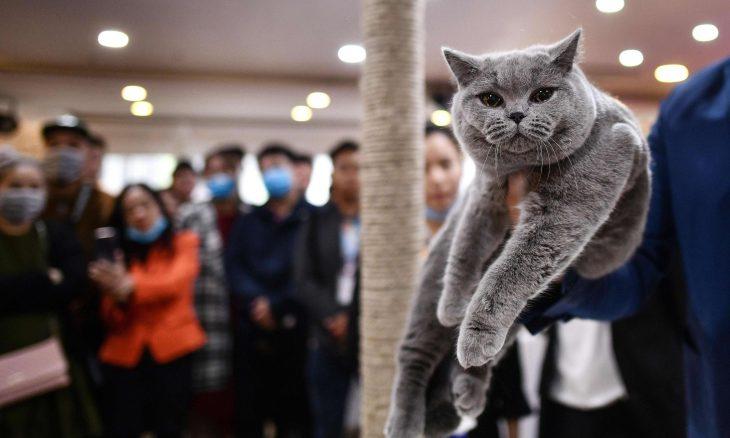 القطط كائنات تستحق الحب..ما رأيك ؟ ـ (صور)
