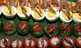 طباخ يضيف الحشرات إلى أطباق تقليدية