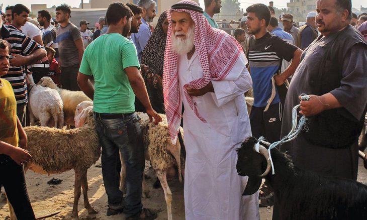 غزة: إقبال ضعيف على شراء الأضاحي رغم انخفاض أسعارها