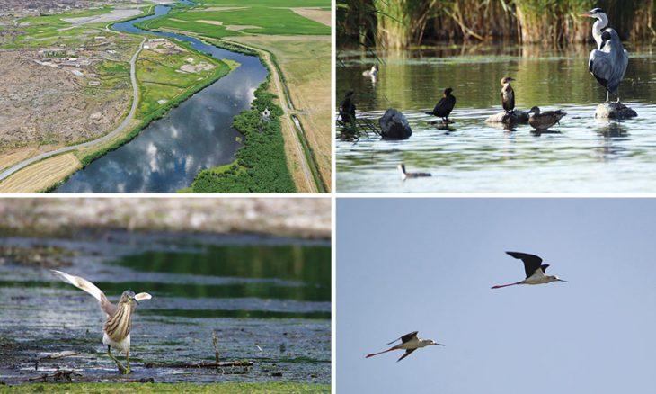من شرق تركيا الطيور المهاجرة تستعد للرحيل إلى أفريقيا القدس العربي