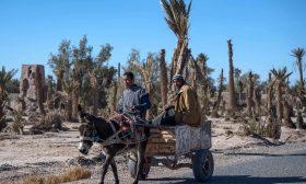 """قضية احتجاز """"حمار"""" تلهب سخرية رواد مواقع التواصل الاجتماعي في المغرب"""