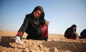 الزراعة ملاذ جامعيات في غزة لمكافحة البطالة