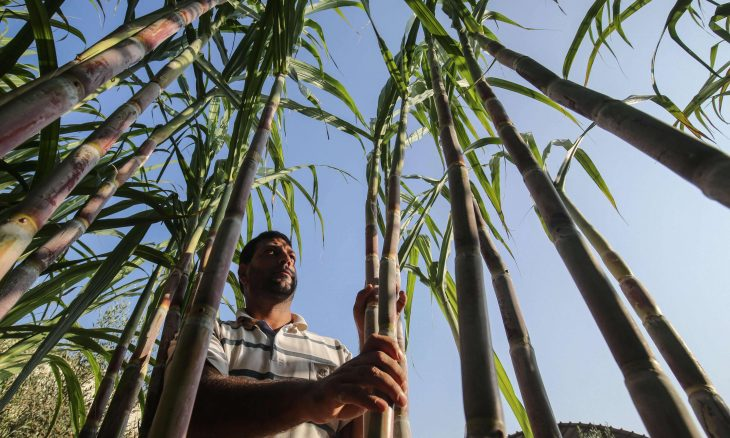 الاتحاد الأوروبي يدعم مزارعي غزة المتضررين من إسرائيل | القدس العربي