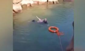 قنصل بريطاني في الصين ينقذ فتاة من الغرق