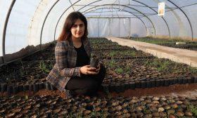 مشروع لزراعة مليون شجرة على أرض كُردستان العراق لمواجهة التغير المناخي