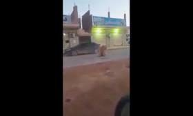 أسد تائه يتجول في شوارع بنغازي- (فيديو)