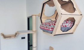 فرنسا: افتتاح فندق فاخر خاص بالقطط في تور
