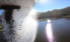 إلقاء آلاف الأسماك في بحيرة أمريكية لإعادة الحياة البرية إليها- (شاهد)