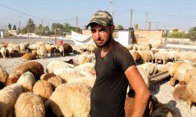 الأزمة الاقتصادية في لبنان تنقذ الخراف من سكين الجزار
