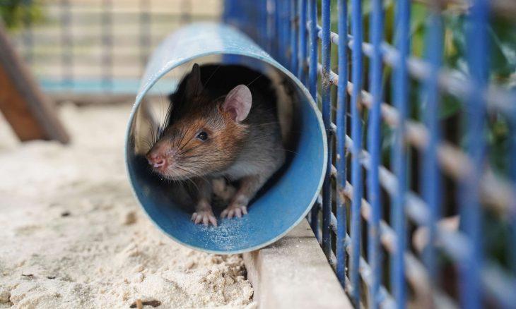 فأر يقتحم برلمان الأندلس ويسبب الفوضى- (شاهد)
