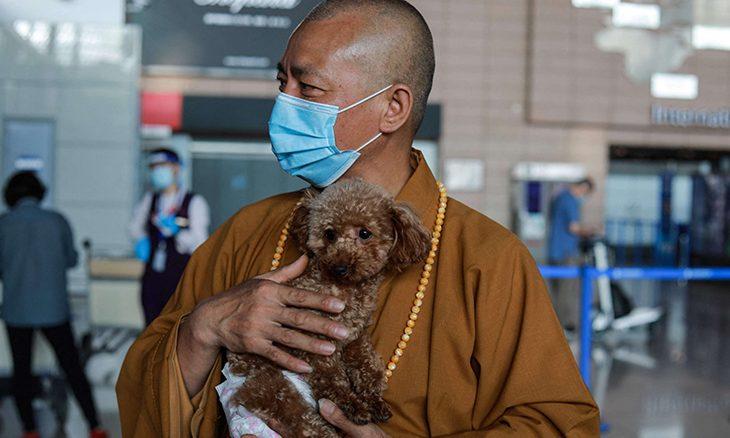 راهب يكرس حياته للاعتناء بالكلاب الشاردة في شنغهاي