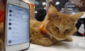هل قطك سعيد؟.. تطبيق على الهاتف يطلعك على حالته النفسية