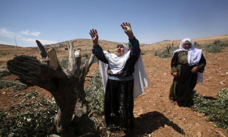 الضفة الغربية.. مستوطنون يتلفون أشجار الزيتون في حقل فلسطيني