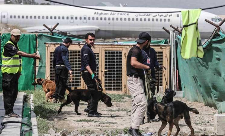 الكلاب المتروكة في مطار كابول بعد الانسحاب الأمريكي جاهزة للعودة للعمل- (صور)