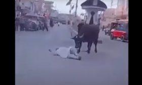 ثور هائج يهاجم المارّة في مدينة عراقية ويصيبهم بجروح خطيرة- (شاهد)